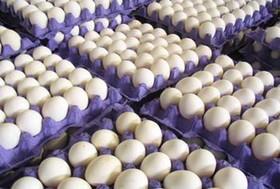 اصفهان کمبود تخممرغ ندارد