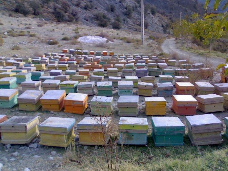 اثر بخشی و سخاوت را از زنبور عسل بیاموزیم