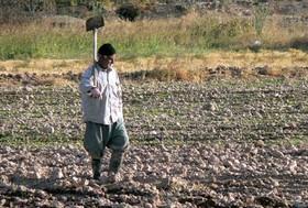 خشکی ۹۹ درصد اراضی کشاورزی شرق اصفهان