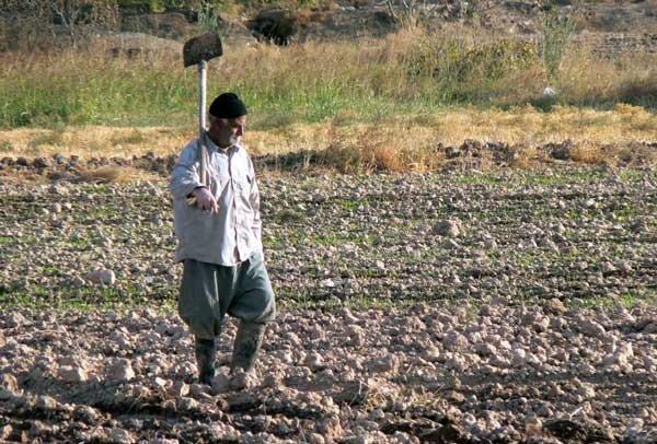 رنجنامه کشاورزان شهرضایی/کار زیاد و مزد ناچیز
