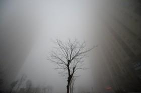 نسخه ژاپنی کاهش آلودگی هوا