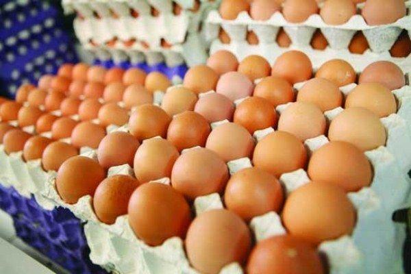 قیمت تخممرغ کاهش یافت