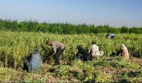 کشاورزی داخل ارزآوری برای کشور ندارد