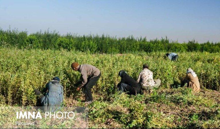 رکود صنعت افراد را به سمت کشاورزی سوق داده است
