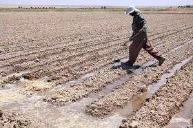 آب کافی برای همه اراضی کشاورزی اصفهان نداریم