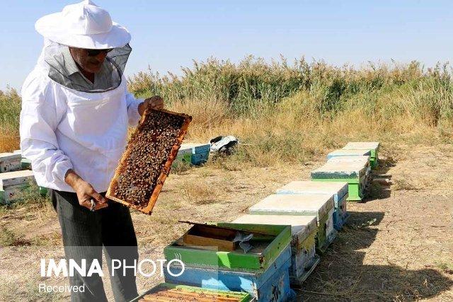 تولید  ۱۱۲ هزار تن عسل در کشور