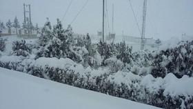 بارش ۲ سانتی متری برف در شهرضا