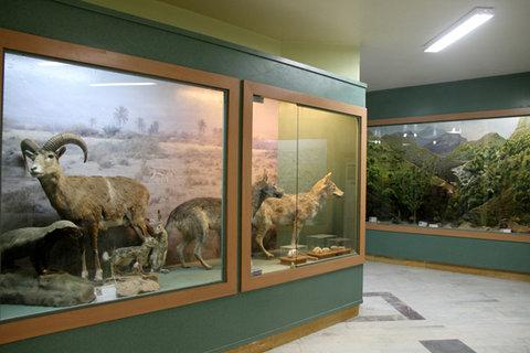 موزه محيط زيست
