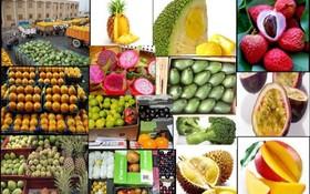 لزوم اتخاذ تدابیر مناسب برای استمرار آرامش حاکم بر بازار محصولات کشاورزی