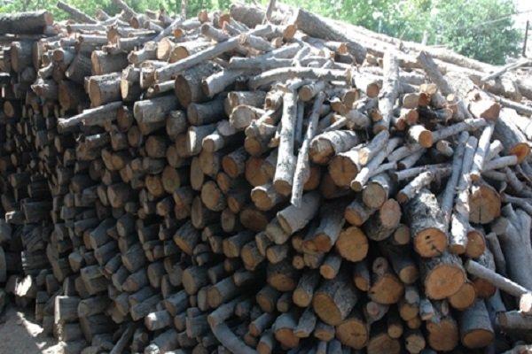 کشف چوب بلوط قاچاق در اصفهان ۶۵۰ درصد افزایش یافت
