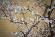 بوی بهار میرسد