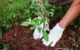 نصراصفهانی: اختصاص ۱۲۴ میلیارد تومان اعتبار برای حفظ درختان در بودجه ۹۷