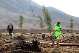 مزروعی: ضرورت کاشت گونههای مقاوم به کمآبی در اصفهان