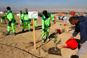 همسر شهید یزدی: شهرداریدر روز درختکاری نام و یاد شهدا را زنده نگه داشت