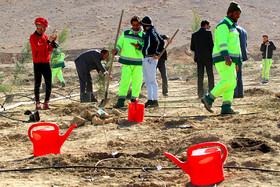 بازار داغ عکسهای سلفی تا کاشت درخت به یاد شهیدان