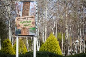 کاشت ۱۲ هزار اصله درخت در منطقه ۱۱