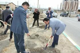 کاشت ۱۲ هزار اصله نهال در گلپایگان