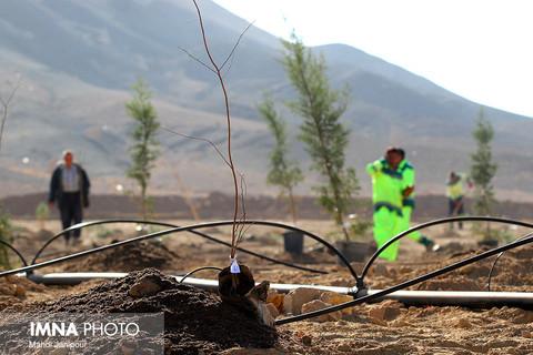 اجرای بیش از ۱۰۰ هکتار درختکاری در ارتفاعات شیراز