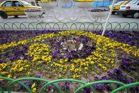 دوستی بنفشه با باغچه ...
