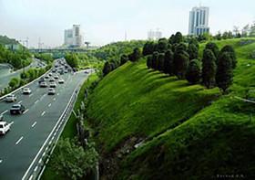 کاشت درخت در بزرگراهها به کاهش آلودگی هوا کمک نمیکند