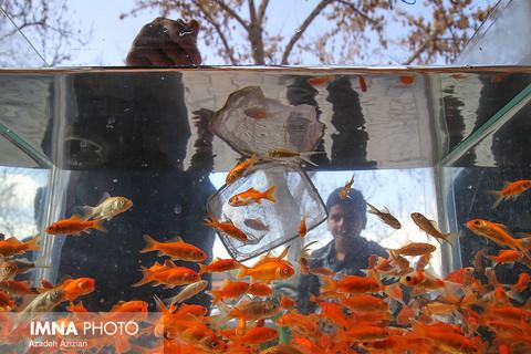 بازار ماهی قرمز  نوروز