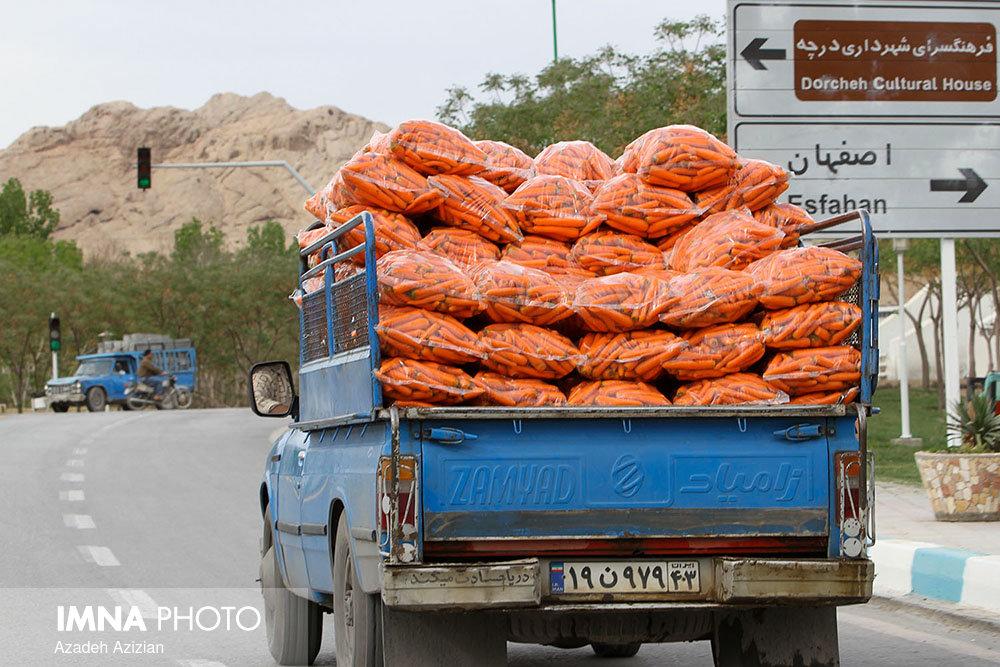 افزایش قیمت هویج ناشی از بارندگیهای اخیر است