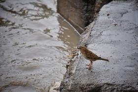 غرب اصفهان بارانی میشود