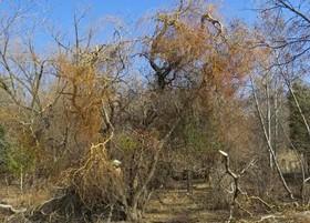 خسارت وارد کردن به درختان پیگرد قانونی دارد