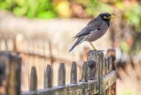 تکثیر  ۵۰۰ قطعه پرنده در ناژوان