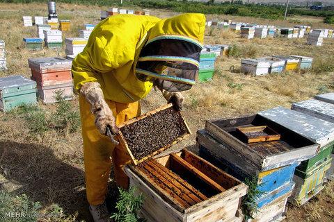 پیشنهاد ارایه تسهیلات ۵.۸ هزار میلیارد تومانی به زنبورداران