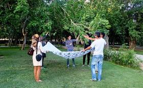 توت درختان شهر را بخوریم یا نه؟