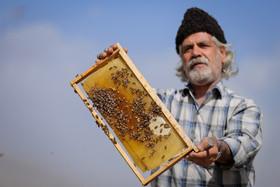 تجاریسازی، حلقه مفقوده تولید عسل در چم نور