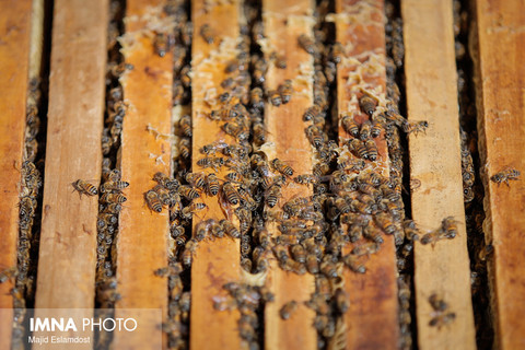 عسل،اکثیر شفا بخش