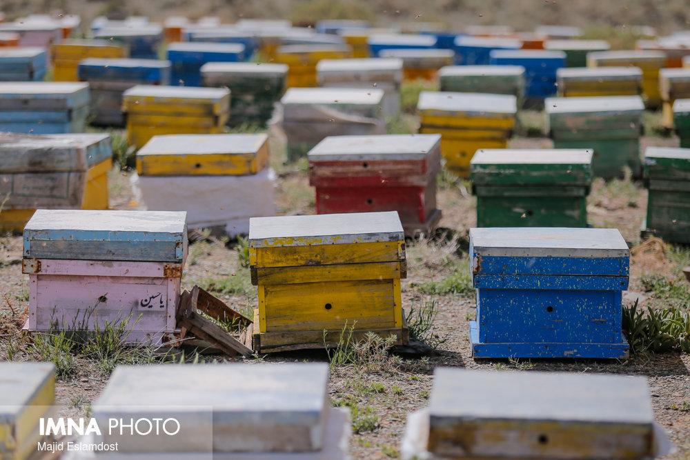 ۹۰ درصد عسل خوانسار با کیفیت تولید میشود