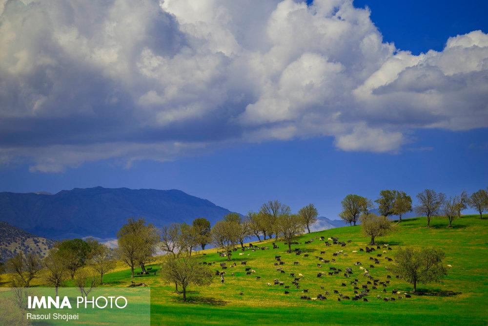 Sadat Hosseini plain; a green jewel in south of Iran