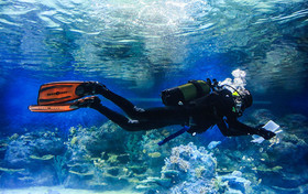 Isfahan aquarium has a lot to offer