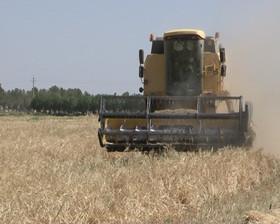خشکی ۱۵ هزار هکتار از زمین های کشاورزی برخوار