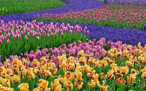 گلهای مقاوم به خشکی را بشناسیم
