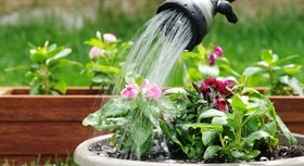 Greywater irrigation best way to save water