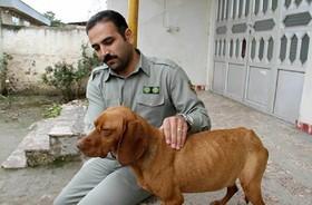سگهای آموزش دیده به کمک محیط بانان قمیشلو آمدند