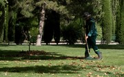Autumn leaves to turn into free fertilizers