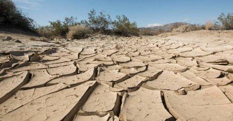 اعتبارات خشکسالی جوابگوی خسارت به باغداران نیست