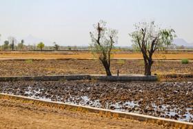 ۸ هزار هکتار اراضی کشاورزی بلااستفاده است