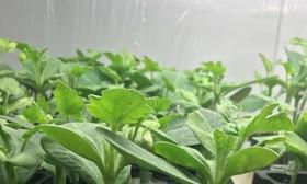 ارزش افزوده بخش تهک کشاورزی به ۲۵۳ میلیارد ریال رسید