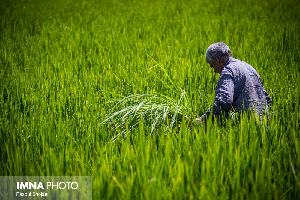 هدف از تشکیل مراکز ترویج کشاورزی چیست؟