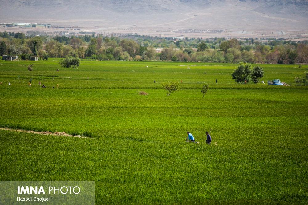 افزایش به ۱۱۳ هزار هکتار در زمینهای کشاورزی بالادست زاینده رود