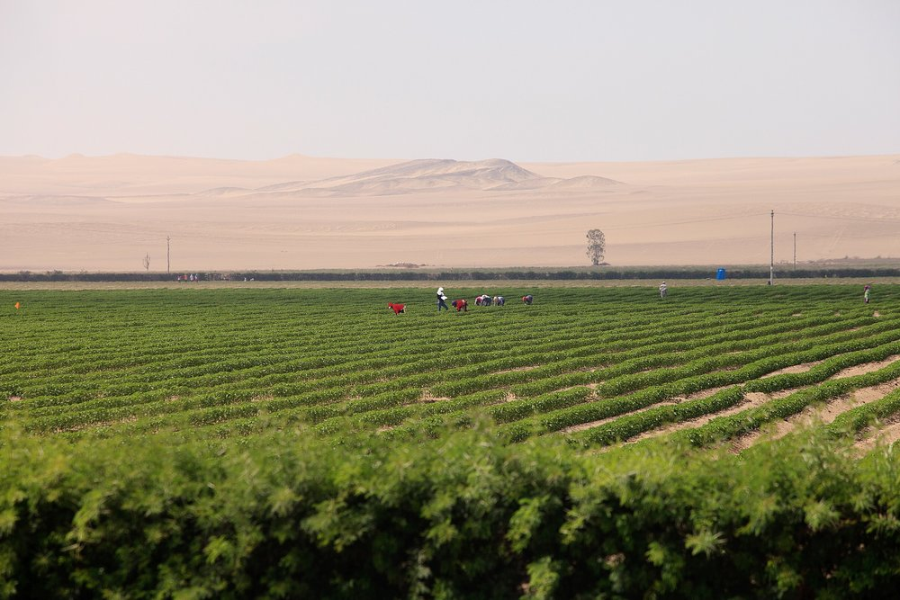 پرو و کشاورزی
