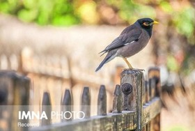 پرندگان در محیطهای پر استرس عمرکوتاهتری دارند