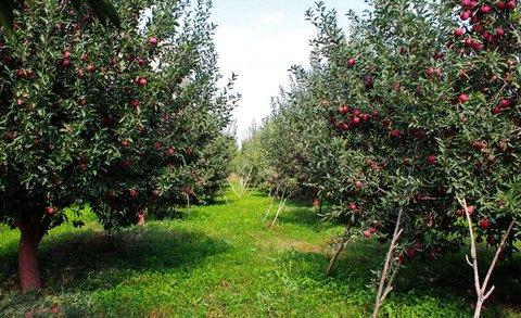 در چشمانداز پنج ساله، برند شهر رزوه صنعت باغداری و گلخانه است