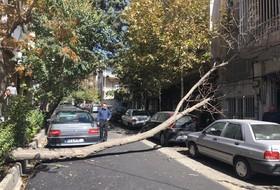 سقوط چند اصله درخت در پی وزش شدید باد